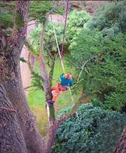 DL Corran Tree Surgery Newport