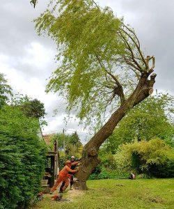 Domestic tree surgery d l corran tree surgeons