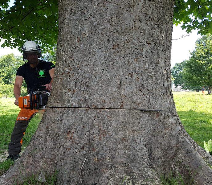 Tree Felling Abergavenny D L Corran Tree Surgeons