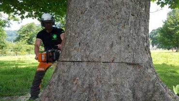Tree Felling Services D L Corran Tree Surgeons Newport