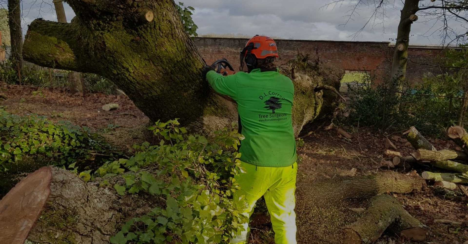 D-L-Corran-Tree-Surgeons-Abergavenny-Slider-3